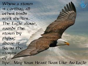 Storm-Eagle