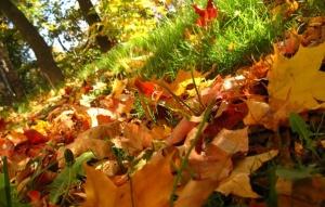 priroda-osen-listya-trava